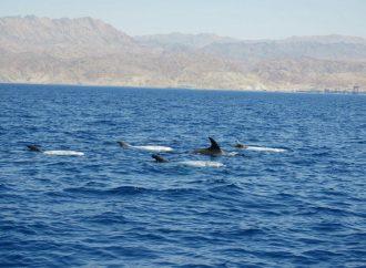 El turismo acuático israelí se extiende a los delfines