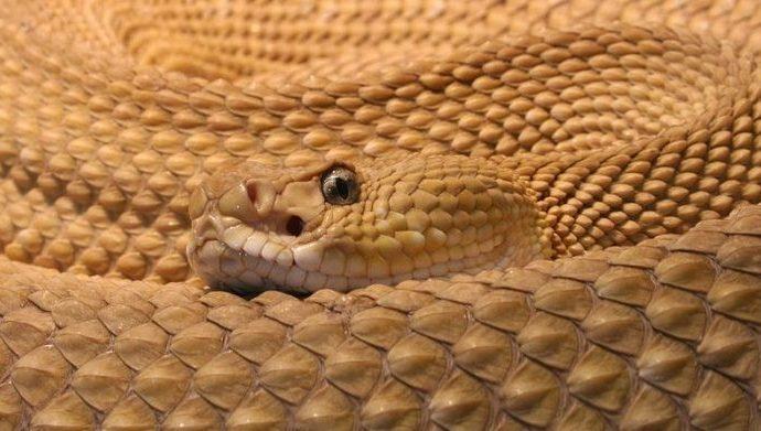 Turista en condición grave después de ser mordida por una serpiente