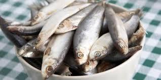 La planta procesadora de pescado
