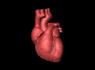 Equipo de EE. UU. reanima el corazón muerto y sin cuerpo antes del trasplante