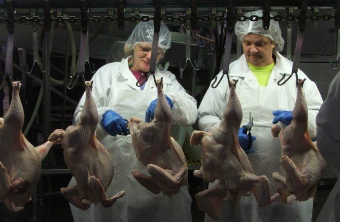 Empire Kosher cierra la planta de procesamiento de pollo por 2 semanas después de que los empleados dan positivo por el coronavirus