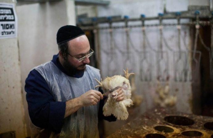 Hungría suministrará paquetes de aves de corral kosher a las comunidades judías de Europa