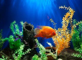Si realmente amaras a los peces no los comerías