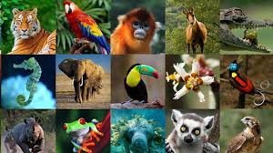 Nuestro instinto animal