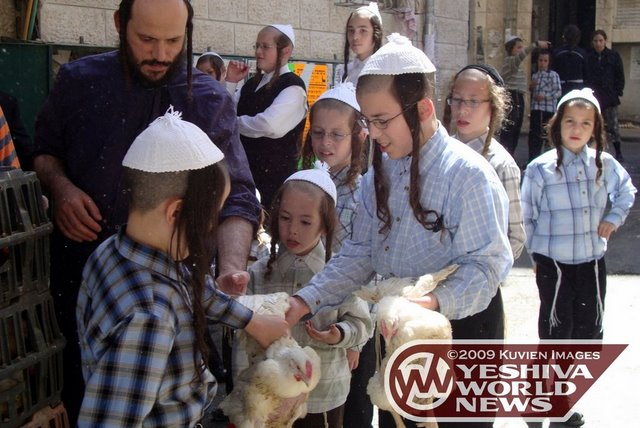 Agudath Israel reedita Kaparot Kol Korei