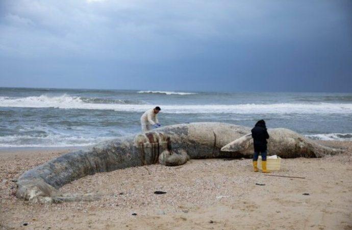 Israel cierra la costa mediterránea después del derrame de petróleo, posiblemente el peor en la historia de Israel