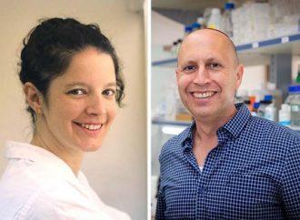 Universidad de Tel Aviv: Los glóbulos blancos pueden ayudar a destruir los tumores malignos